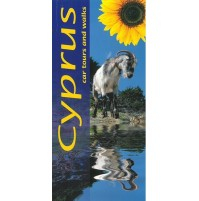 Cyprus Sunflower