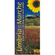 Umbria and the Marches Sunflower