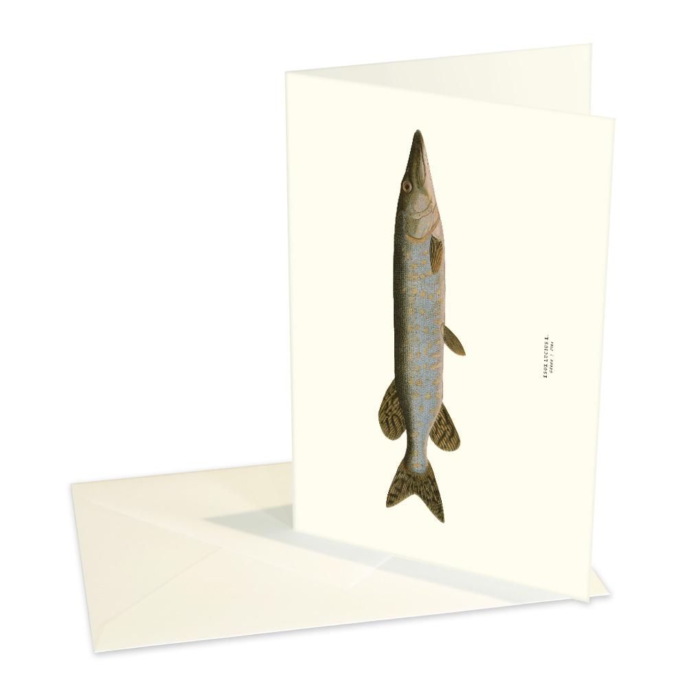 Vykort Gädda med kuvert