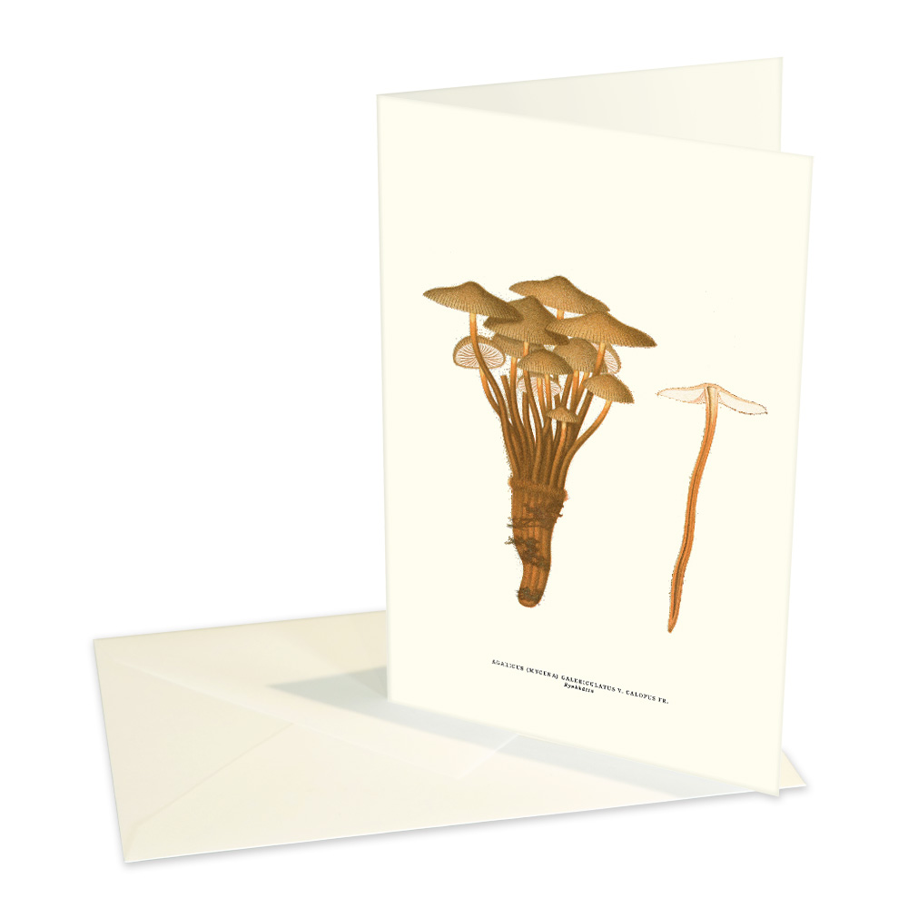 Vykort Rynkhätta med kuvert