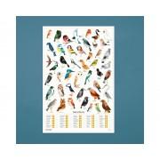 Scratch Garden Birds Poster